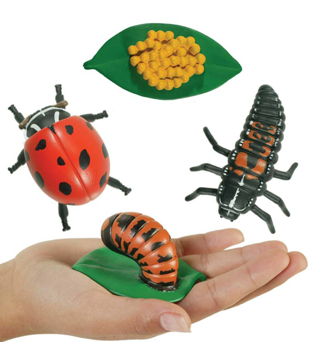 Detailed Oversized Insect Life Stage Sets