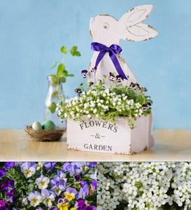Bunny Easter Garden Kit
