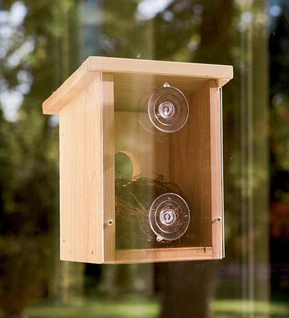 Wood Observation Birdhouse with Clear Back