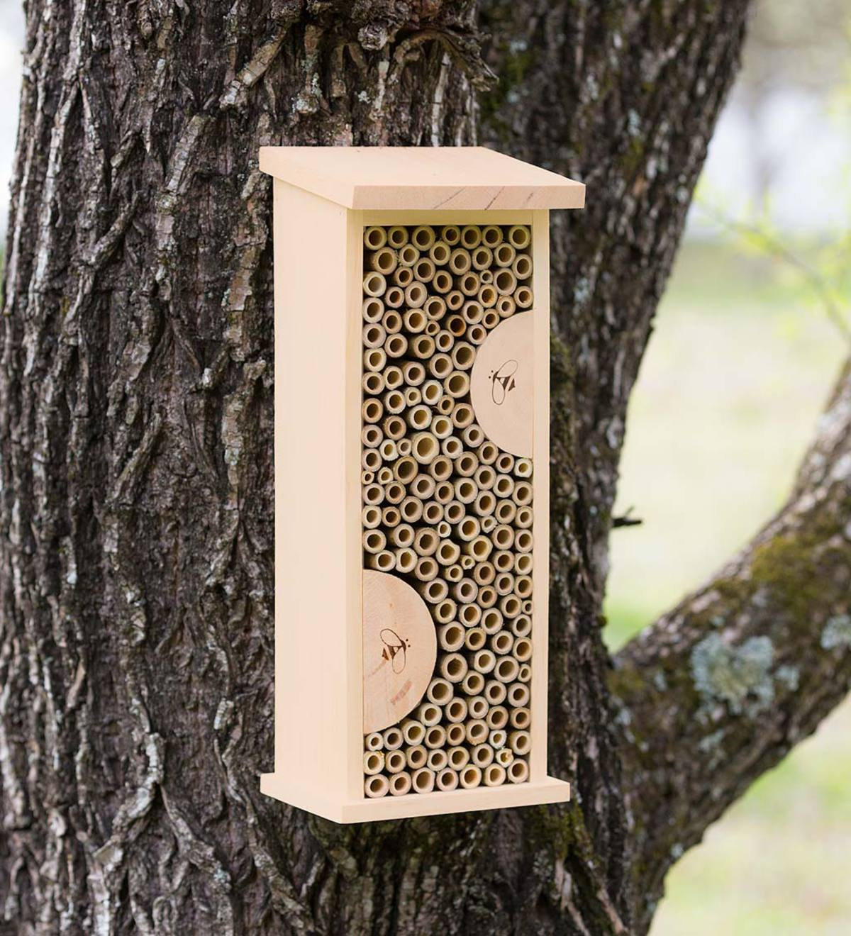 Bee House with Field Guide Cards