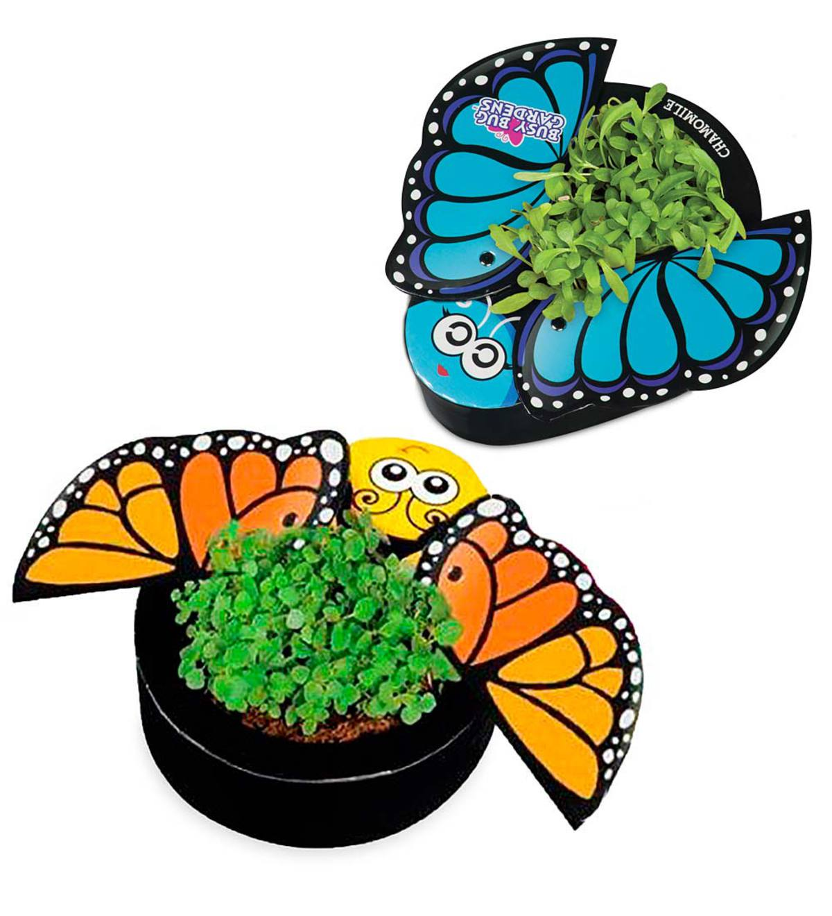 Busy Bug Butterfly Garden Kits (Set Of 2)   Butterfly